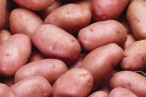 Julien Bouche - Maraîcher Bio - Pommes De Terre Rosabelle 5kg