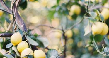 Graines Précieuses - Marinade Aux Citrons Confits Bio De Nice, Aux Épices Douces Et Gingembre Frais Râpé.