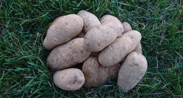 La Ferme Boréale - Pommes De Terre Agata Calibre 55-75 - 5kg