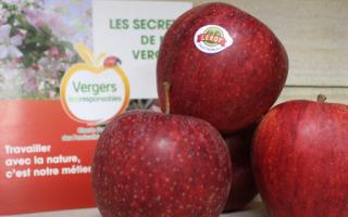 Le Châtaignier - Pommes Gala - 1 Kg