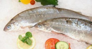 Ma poissonnière - Fera Du Lac - 2 Pièces De 400 G