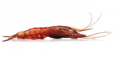 Qwehli - Crevettes Sauvages Gambero Rosso - 1 Kg