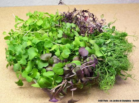 Les Jardins de Champlecy - Lot De 5 Saladebox De Micro-pousses