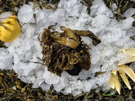 Thaëron - Kombu Royal -  Barquette de 125 g