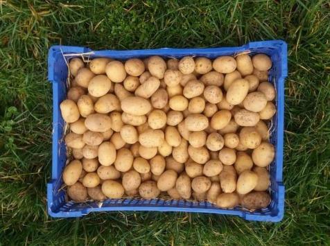 La Ferme Boréale - Pommes De Terre Agata Calibre 28-35 - 5kg