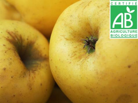 Mon Petit Producteur - Pomme Tentation Bio - 1kg
