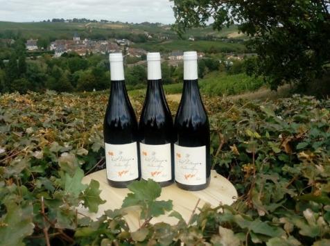 Sancerre Doudeau-Leger - Vent d'Ange - Vin de Pays du Val de Loire Rouge IGP 2020 - 3 Bouteilles