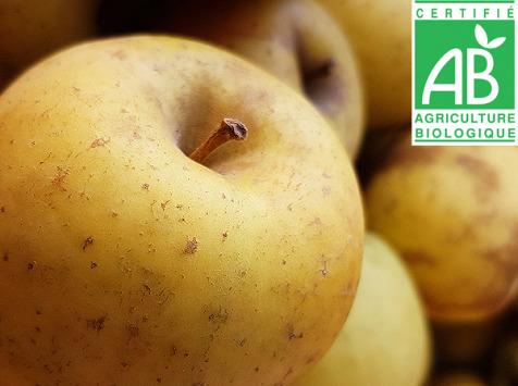 Mon Petit Producteur - Pomme Délice D'or Bio - 1 Kg