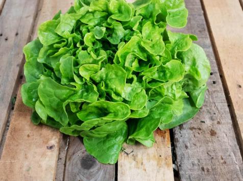 La Boite à Herbes - Lot De 2 Feuille De Chène Verte Bio