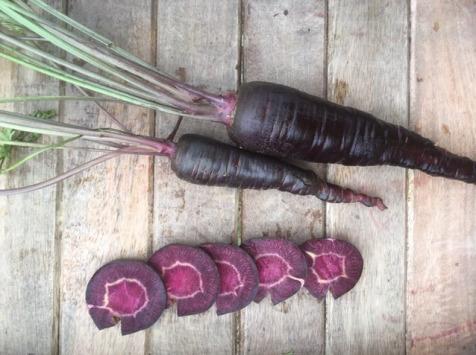 Ferme du Mont de Cuy - Carottes Botte Violette Avec Fanes