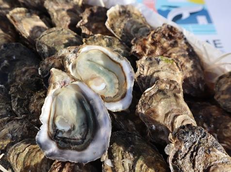 LA FERME DES BALEINES - Bourriche De 24 Huîtres N°5 - 100% Élevées En Claires