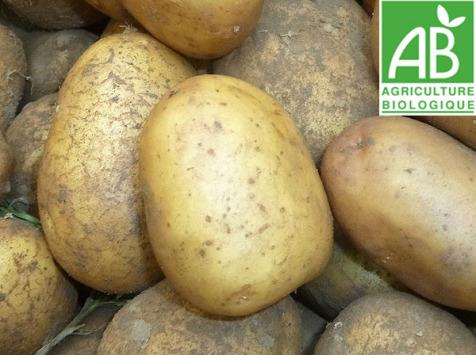 Mon Petit Producteur - Pomme De Terre Bio À Chair Ferme 25kg