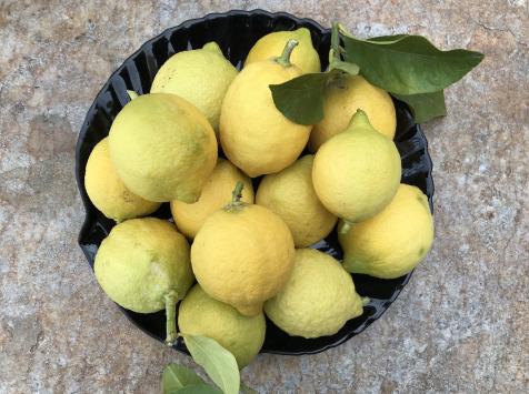 Le Jardin des Antipodes - Citron Femminello Frais Non-traités De Vintimille - 50kg