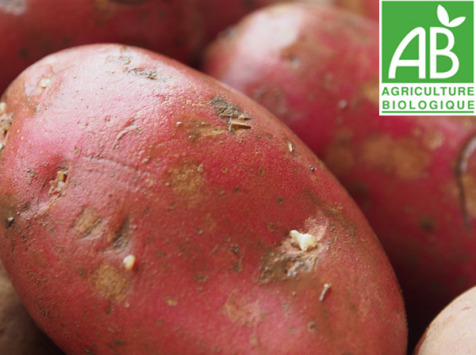Mon Petit Producteur - Pomme De Terre Bio Rubis - Variété À Chair Ferme