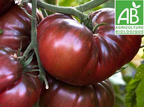 Mon Petit Producteur - Tomate Ancienne Bio Noire De Crimée