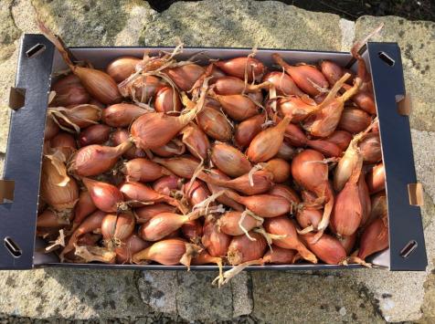 Maison Quéméner - Echalotes Traditionnelles - 2kg