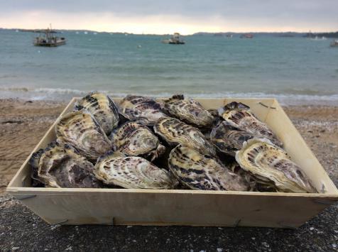 Les Huîtres Chaumard - Huîtres de Paimpol N°3 - bourriche de 24 pièces (2 douzaines)