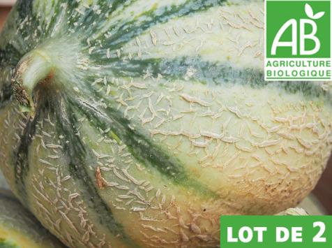 Mon Petit Producteur - Melon Céleste x 2 [ Poids Moyen 1500 kg ]