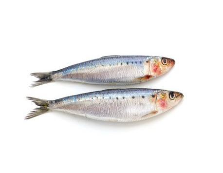 Ma poissonnière - Sardine Atlantique Entière - Lot De 2 Kg