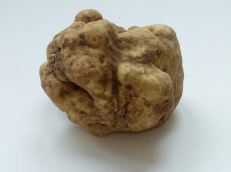 ALENA la Truffe d'Aquitaine - Truffe blanche (Truffe d'Alba) Tuber Magnatum Pico - 100g