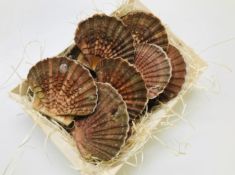 Mer Sea - Coquille Saint Jacques Normande 12 Kg - vivantes