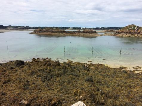 Les Huîtres Chaumard - Huîtres De Saint Riom - 5 Douzaines De 3 (60 Huîtres)