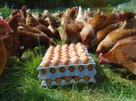 La Ferme de l'Abbaye - Oeufs de Poules Rousses Lohman (3 plaques de 30 œufs)
