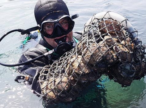 LTJ2 - Pêche en plongée - Ormeau De Plongée - 1 Kg
