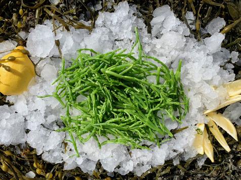 Thaëron - Salicorne -  Barquette de 1 kg