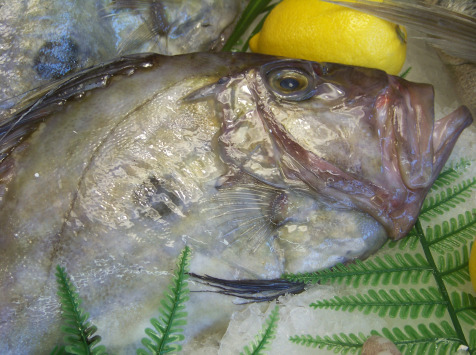 Poissonnerie Le Marlin - St Pierre - 500g - Nettoyé