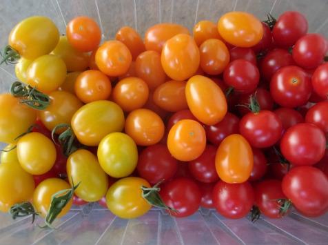 La Ferme du Pont d'Achelles - Tomates Cerise Mélange