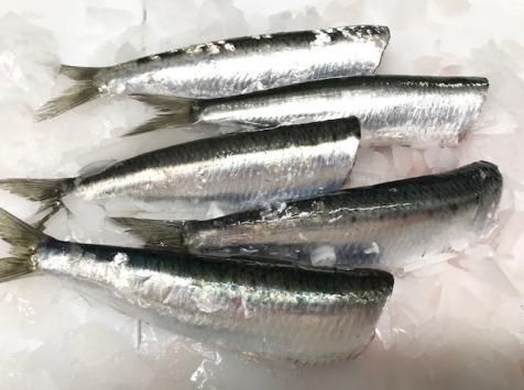 Pêcheries Les Brisants - Sardine Bretonne Fraîche - Étêtée vidée - 1kg