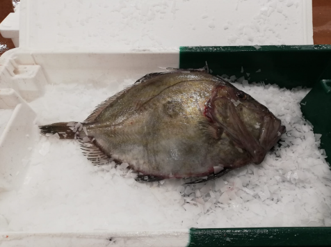 Ô'Poisson - Saint Pierre - Pièce De 1kg/1,2kg