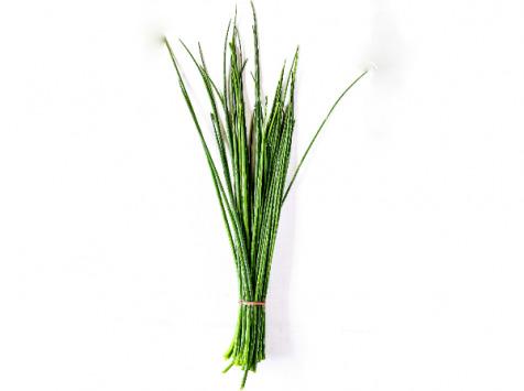 Les Herbes du Roussillon - Ciboulette Fraîche