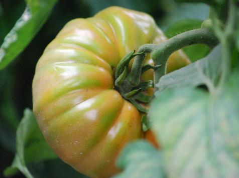 La Boite à Herbes - Tomate Marmande Biologique - 1 kg