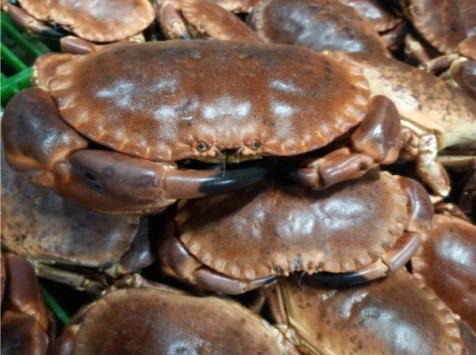 Les Viviers de Porsguen - Tourteaux vivants 800gr x 3 kg