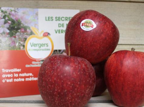 Le Châtaignier - Pommes Gala - Colis 14kg