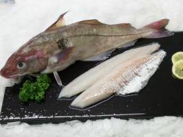 Pêcheries Les Brisants - Ulysse Marée - Filet D'eglefin - Pelé - 400g