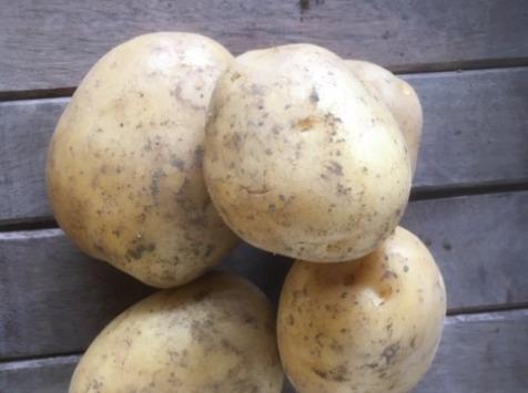 Ferme du Mont de Cuy - Pomme De Terre Tendre Colomba