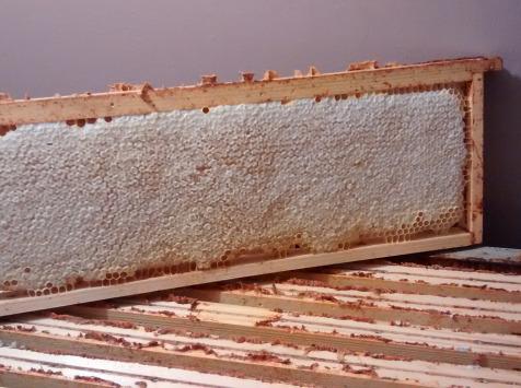 Miel et Pollen - Cadre De Miel En Rayon
