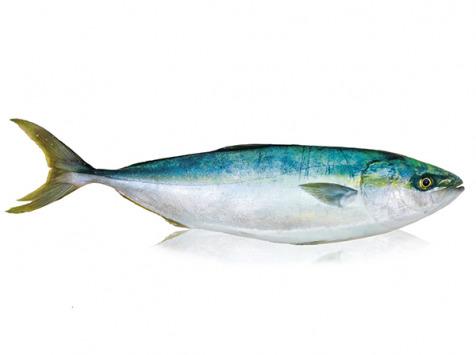 Qwehli - Sériole - Filet 1.4kg DLUO COURTE