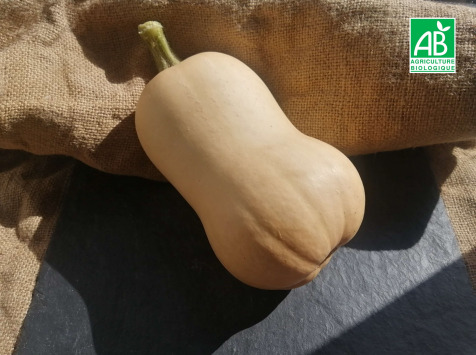 Micro-Ferme de Carcouet - Butternut Bio - 5 kg
