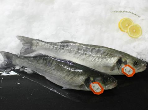 Pêcheries Les Brisants - Ulysse Marée - Bar De Ligne - Vidé Et Écaillé - 1 Pièce / 1.2kg