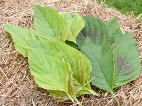 Ferme des petites Brossardières - Amarante, jeunes feuilles - 100 g