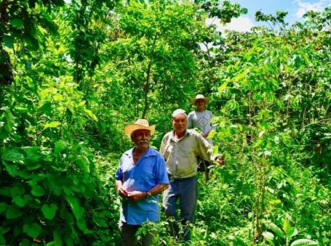 LA TRIBU - Café Triunfo Verde Mexique Grain 1kg Équitable & Bio