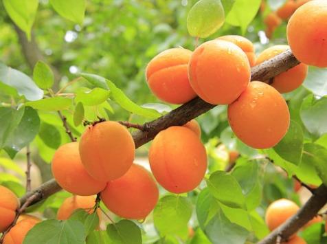 La Boite à Herbes - Abricots de saison Bio - 500gr