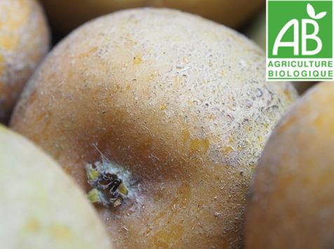 Mon Petit Producteur - Pomme Patte De Loup