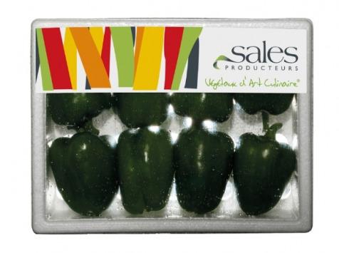 Maison Sales - Végétaux d'Art Culinaire - Mini Poivron Vert - 8 Pièces