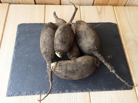 Gourmets de l'Ouest - Radis noirs de Saint-malo