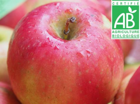 Mon Petit Producteur - Pomme Idared Bio - 3kg